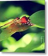 Butterfly Taking The High Ground Metal Print
