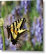 Butterfly Thoughts Metal Print