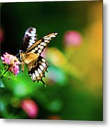 Butterfly Two Metal Print