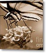 Butterfly Whisper Metal Print