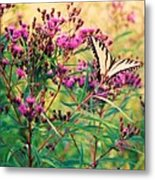 Butterfly Wildflower Metal Print