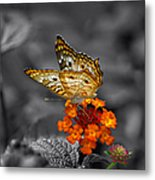 Butterfly Wings Of Sun Light Selective Coloring Black And White Digital Art Metal Print