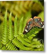 Butterfly With Eyes  Metal Print