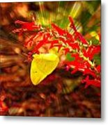 Butterfly With Flare Metal Print