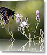 Butterfly With Reflection Metal Print