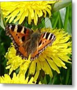 Butterfly Yellow Metal Print