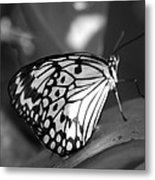 Butterfly7 Metal Print