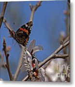 Butterfy In Almond Blossoms   #9289 Metal Print