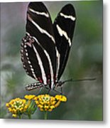 Butterly Metal Print