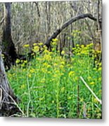 Butterweed Florida Wildflower Metal Print