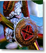 Pacific Northwest Washington Button Seed Pod Metal Print