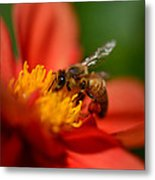 Buzz Is The Word Metal Print
