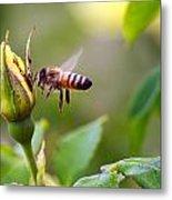 Buzz The Bee Metal Print
