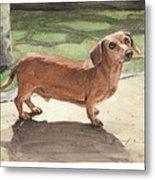 Buzz The Dachshund Watercolor Portrait Metal Print