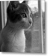 Bw The Inquisitive Kitty Jackson Metal Print