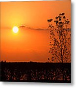 By The Everglades Metal Print