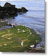 By The Shoreline Metal Print