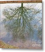 C And O Canal Tree Reflection Metal Print