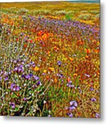 Ca Poppies And Goldfields And Lacy Phacelia And Sage In Antelope Valley Ca Poppy Reserve-california Metal Print
