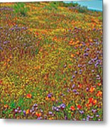Ca Poppies And Goldfields And Lacy Phacelia In  Antelope Valley Ca Poppy Reserve-california  Metal Print