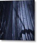 Cabbage Palm No. 2 Metal Print