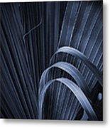 Cabbage Palm No. 3 Metal Print