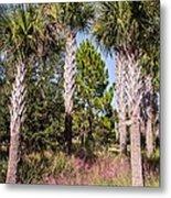 Cabbage Palm Metal Print