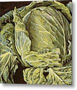 Cabbage Still Life Metal Print