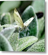 Cabbage White Butterfly In Flight Metal Print