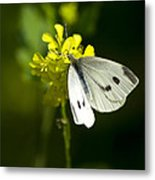 Cabbage White Butterfly On Yellow Flower Metal Print