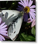 Cabbage White In Shadow Metal Print