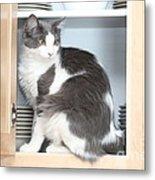 Cabinet Cat Metal Print