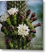 Cacti Bouquet  Metal Print