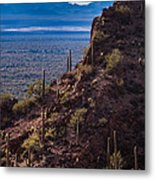 Cacti Covered Rock At Tucson Mountains Metal Print