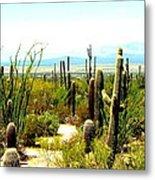 Cacti Garden Metal Print