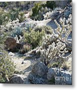 Cactus And Rocks Metal Print