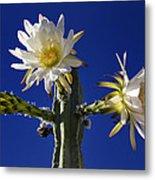 Cactus Blooms Metal Print