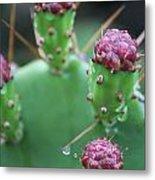 Cactus Dew Metal Print
