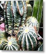 Cactus Family 3 Metal Print