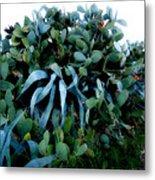 Cactus Family Almeria Region Spain 2013 January Metal Print