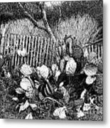 Cactus Fence- Hill Country Texas Metal Print