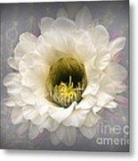 Cactus Bloom Metal Print