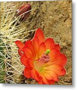Cactus Flower Bright Metal Print
