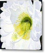 Cactus Flower II Metal Print