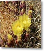 Cactus Flower In Bloom Metal Print