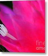 Cactus Flower Summer Bloom Metal Print