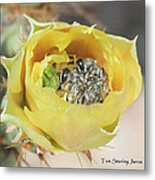 Cactus Flower With Ball Of Bees Metal Print
