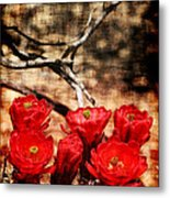Cactus Flowers 2 Metal Print by Julie Lueders