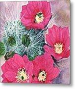 Cactus Flowers I Metal Print