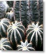Cactus Glistening Metal Print